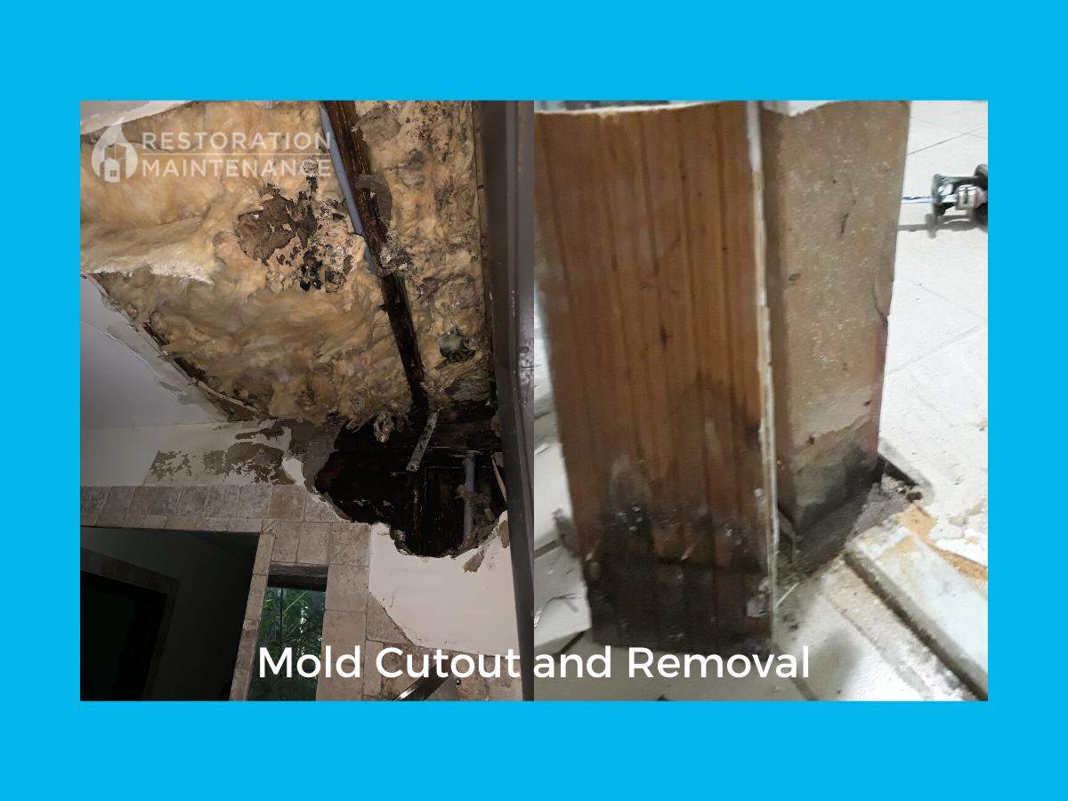 RestoMain Mold Cutout and Removal